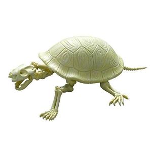 [포즈스켈레톤] 파충류 양서류 No.202 거대 거북이  [4521121300948]
