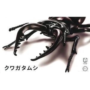 자유연구 시리즈 생물편 사슴벌레  [4968728170732]